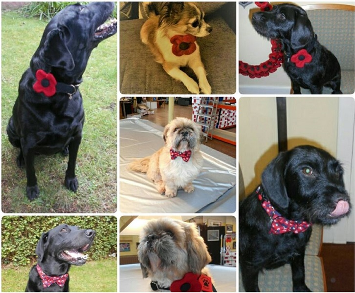 Exclusive hand made dog collars with poppies on sale in Lady Haig's Poppy Factory 9 Warriston Road Edinburgh