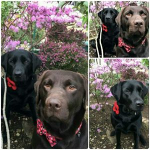 Handmade exclusive harris tweed poppy collars and cotton poppy print bow ties for dogs now in stock at lady haig poppy factory in edinburgh eh7 4hj