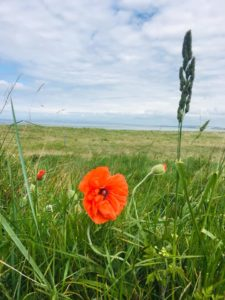Poppies, competition, beach, Greenan, Shore