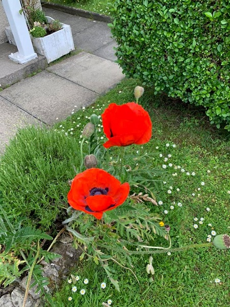 Poppies, Fantastic, Entries, Competition