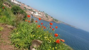 Poppies, Sea, Forth, Fife, Coast